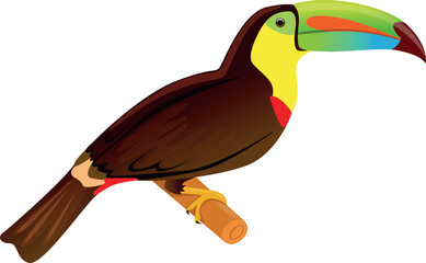 Toucan - Illustration