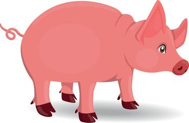 Pig - Illustration