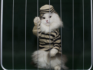 cat criminal behind bars