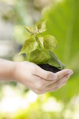 Little green tree in hand