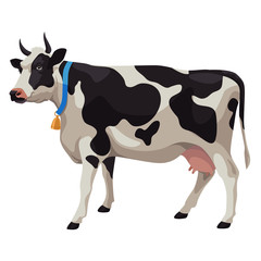 Black and white cow, side view, isolated