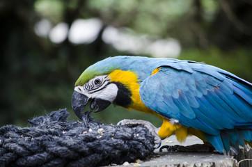 Macaw feeding