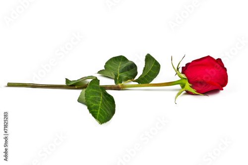 Aluminium Rozen Lonely rose