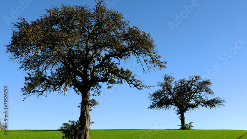 canvas print picture Baum im Feld