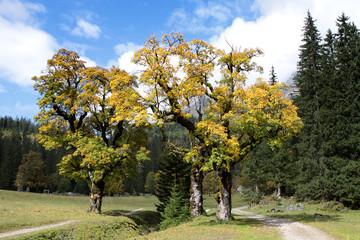 Naturdenkmal Kleiner Ahornboden im Karwendel, Johannistal