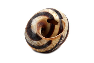 ordinary home garden snail