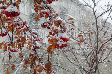 Freezing after rain in Chelyabinsk, Russia