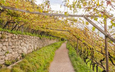 Algund, Waalweg, Algunder Waalweg, Weinberg, Herbst, Italien
