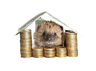 Little hedgehog sitting in the house of money isolated