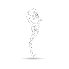Abstract sea horse isolated on a white backgrounds