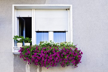window with shutters decorated with petunias