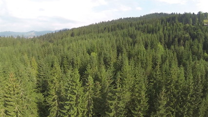 Flight panorama  of  mountain river with  wood. Aerial