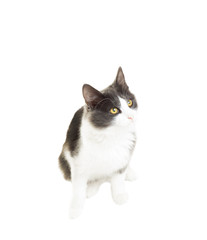 funny black and white cat white background isolated