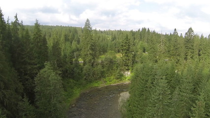 Flight of  mountain river with   wood. Aerial summer  shot