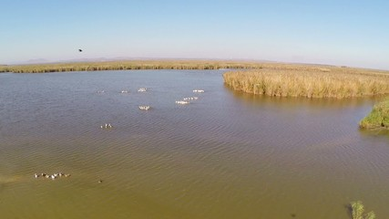 Wild Danube Delta aerial