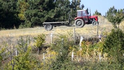 Tractor on vineyard