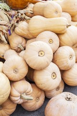 Pumpkins exposed for sale at an agricultural fair