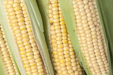 Freshly picked corn cobs