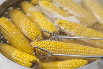 Boiled corn for sale