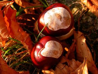 Kastanien mit Herbstlaub
