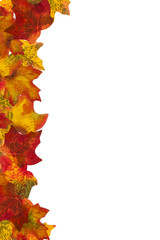 Autumn Leaf Stripe 7 Background