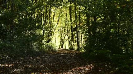 Herbstwald mit grünem Licht