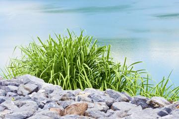 Green grass 004