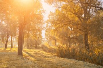 Autumn forest in sunrise