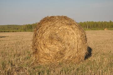 The haystack.