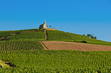 Hill of Fleurie village - Beaujolais