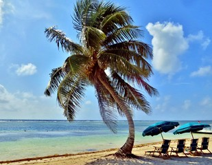 Umbrellas and lounge chairs under a palm tree, on a secluded bea
