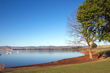 Trees on the Shore of Midmar Dam, Howick, South Africa