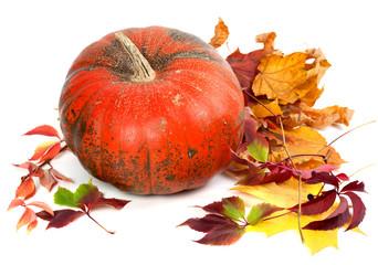 Red ripe pumpkin in autumn leaves.