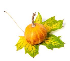 Small decorative pumpkin on autumn multicolor maple-leaf