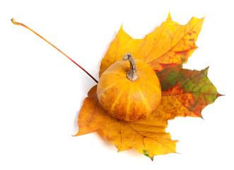 Decorative pumpkin on autumn maple-leaf. Top view.
