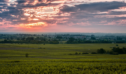 Vineyard of Beaujolais at sunrise time