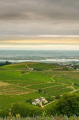 Vineyards of Beaujolais