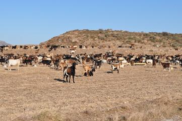 farming on island kos,Greece