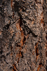 dark pine bark cracked brown