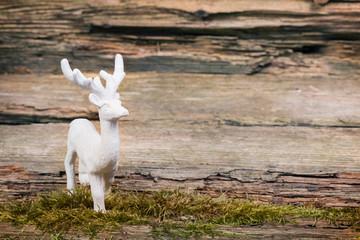 Weißer Hirsch vor Holzhintergrund