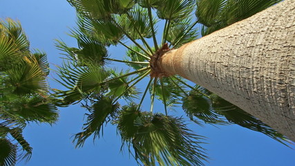Looking up the trunk of a palm tree