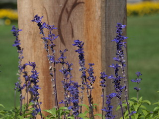 ラベンダーの紫