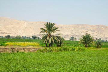 Ackerbau am Nil