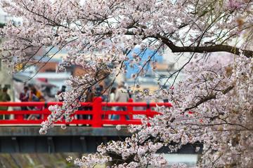 Sakura Season Trip