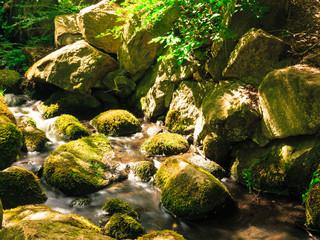 stones in woods forest. stream in gdansk oliva park.