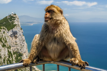 view of monkey on a balustrade of the building on the mountain,