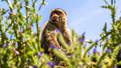 view of monkey on a building on the mountain, gibraltar