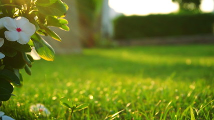 Fresh green lawn in evening light