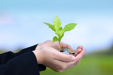 Money, Tree,Coins, Business growing concept