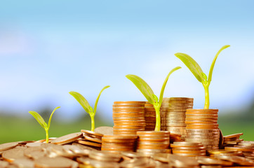 Trees growing on pile of coins money over green and blue sky bac
